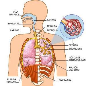Medicina natural para catarro nasal