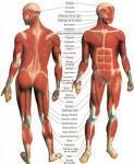 Medicina natural para los músculos