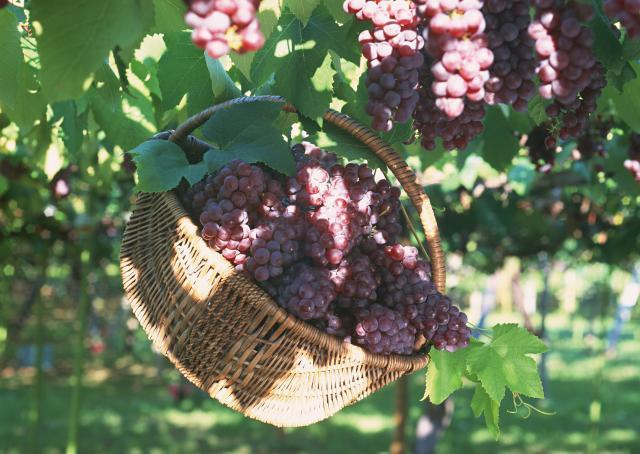 Uvas para una larga vida