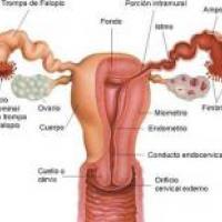 Medicina natural para el Síndrome premenstrual