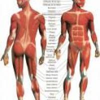 Síntomas de la distonía muscular