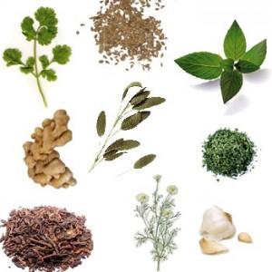 Nombres de plantas medicinales for Tipos de hierbas medicinales