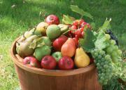 Alimentos para hacer conservas