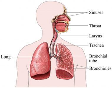 Causas y síntomas del asma