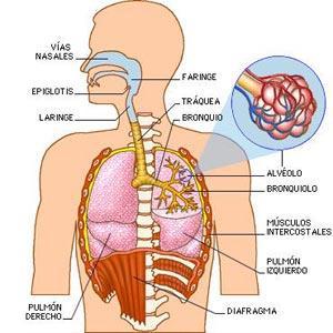 Síntomas y tipos de tos