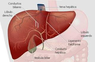 Medicina natural para el hígado