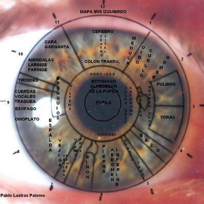 Mapa del iris izquierdo - Iridología