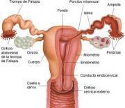 Medicina natural para la menopausia