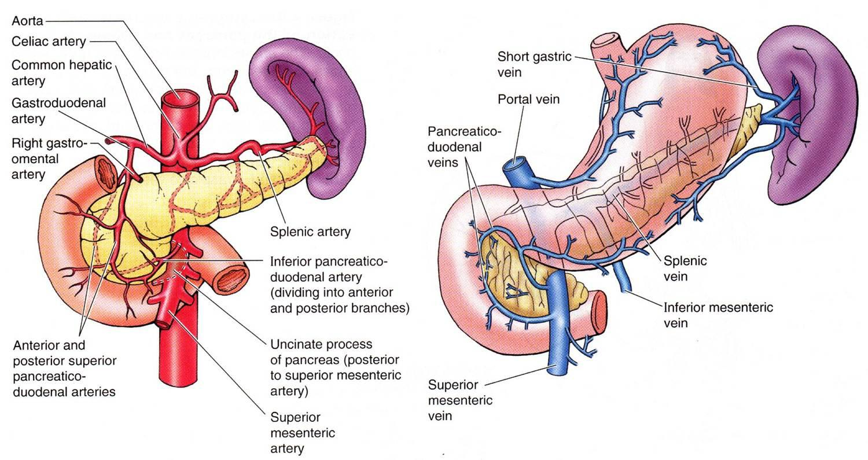 Medicina natural para el páncreas