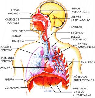Causas y síntomas de disnea