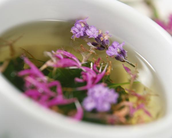 Plantas medicinales estomacales
