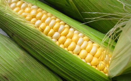 El maíz, uno más entre los cereales