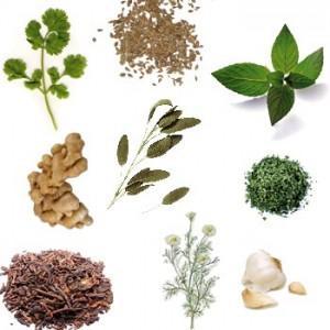 Listado de plantes medicinales en Medicina natural
