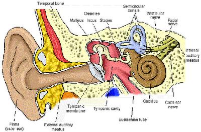 Remedios para zumbido en los oídos