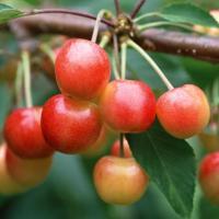 Ciclos de la naturaleza para la nutrición