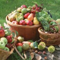 El higienismo da mucha importancia a una alimentación saludable