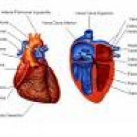 Enfermedades del corazón - Medicina natural