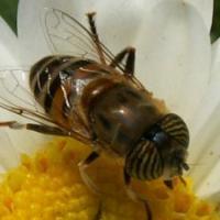 El polen y las alergias