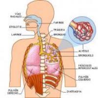 Medicina natural para el enfisema pulmonar
