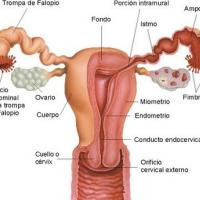 Medicina natural para el flujo vaginal