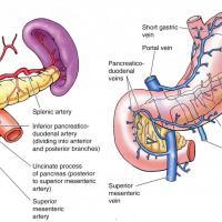 Síntomas y causas de la diabetes mellitus