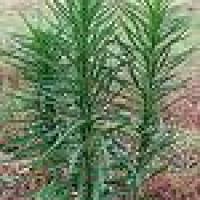 Modo de empleo de las plantas medicinales