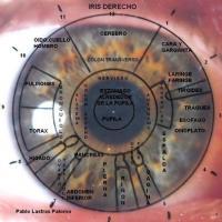 Mapa del iris derecho - Iridología
