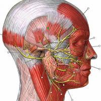 Causas y síntomas de neuralgia del trigémino