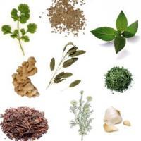 Medicina natural con plantas para la escabiosis y escarlatina