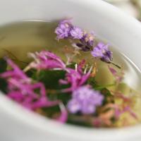 Plantas medicinales para la garganta