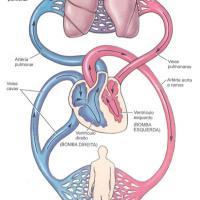 Plantas medicinales para el corazón