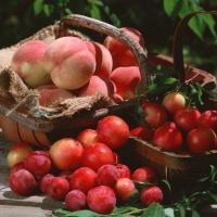 Consejos sobre la nutrición correcta