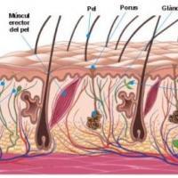 Medicina natural para el sudor o sudoración excesiva